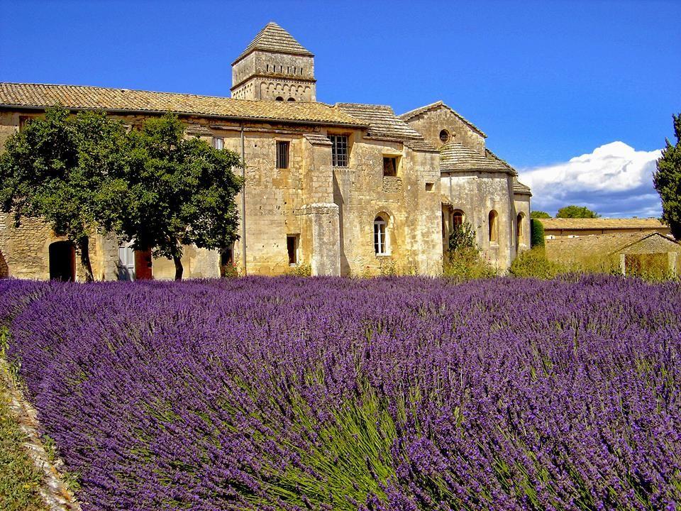 The Lavender Garden At Le Monastère Saint Paul De Mausole At Saint Rémy De Provence Viagens Lugares França