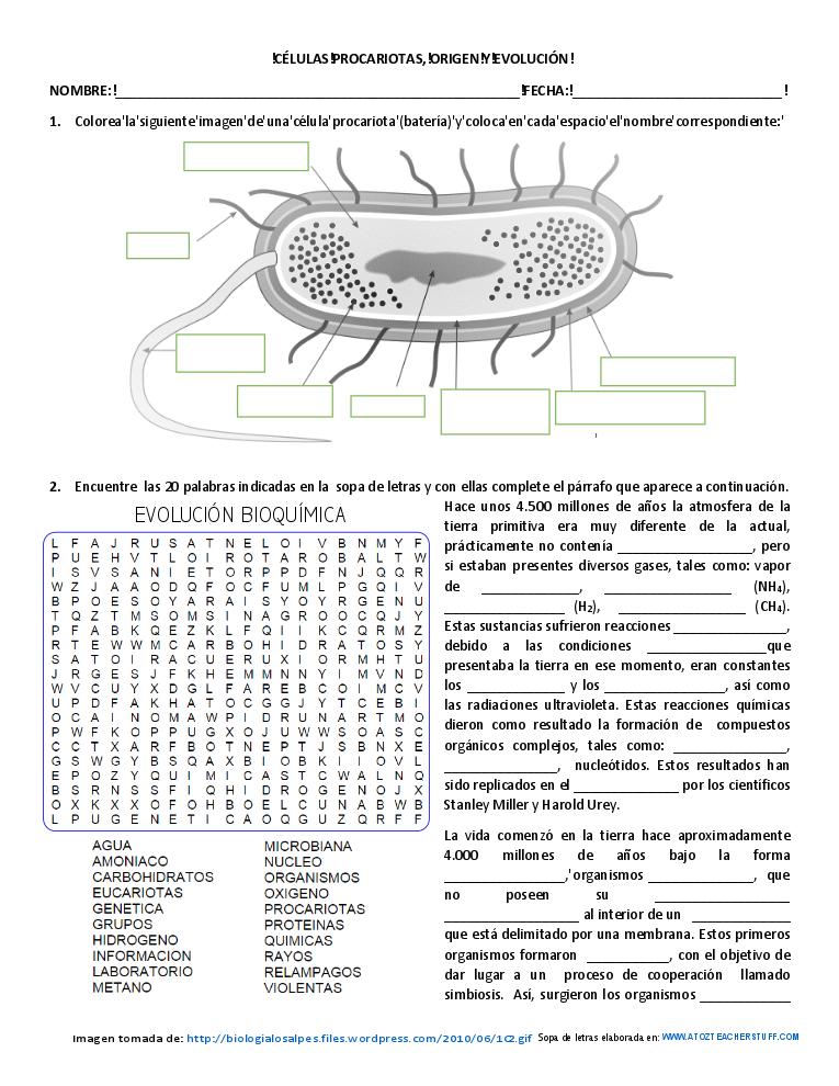 celulas procariotas origen y evolución   PARA APRENDER   Pinterest ...