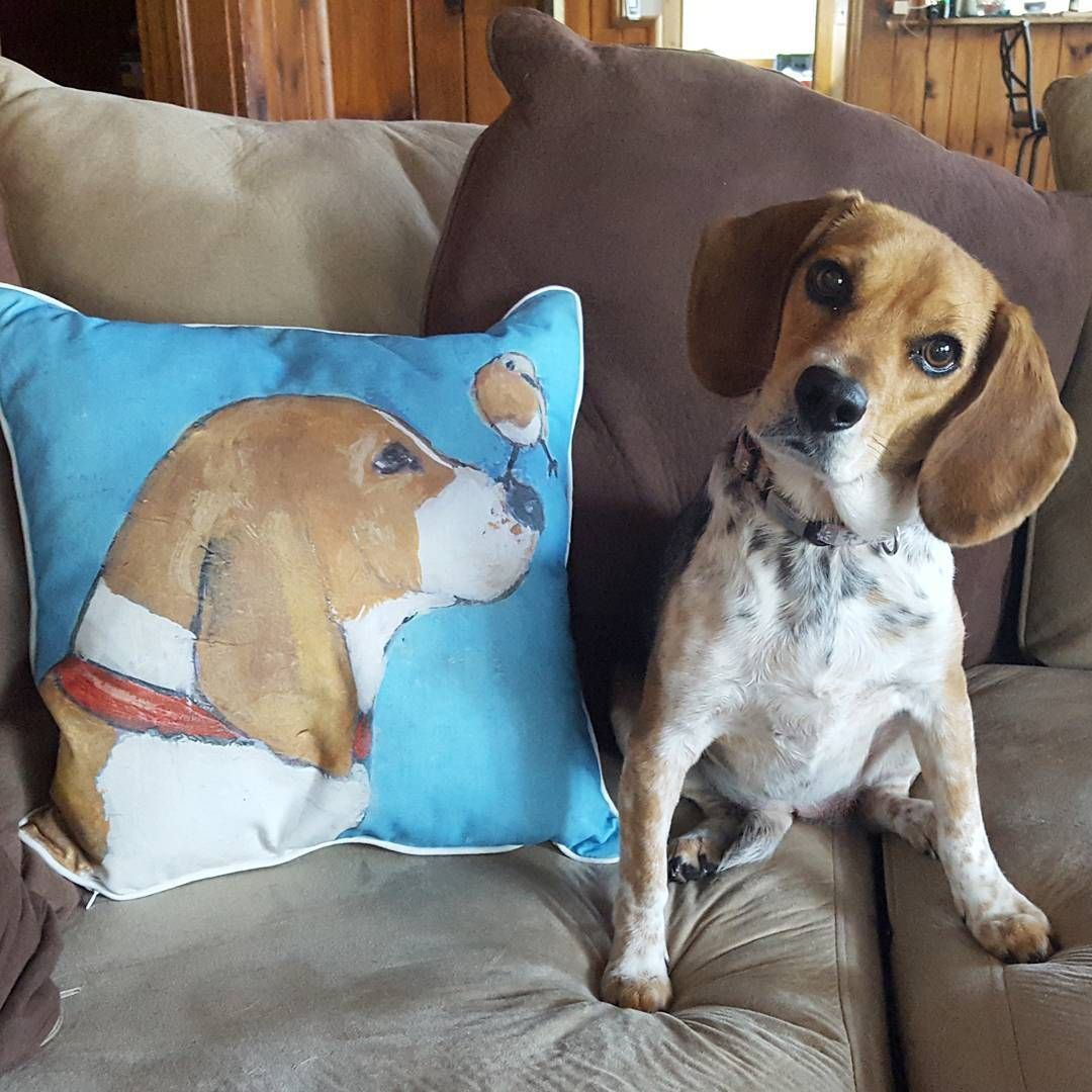 Lemon Beagle Puppies For Sale Indiana References