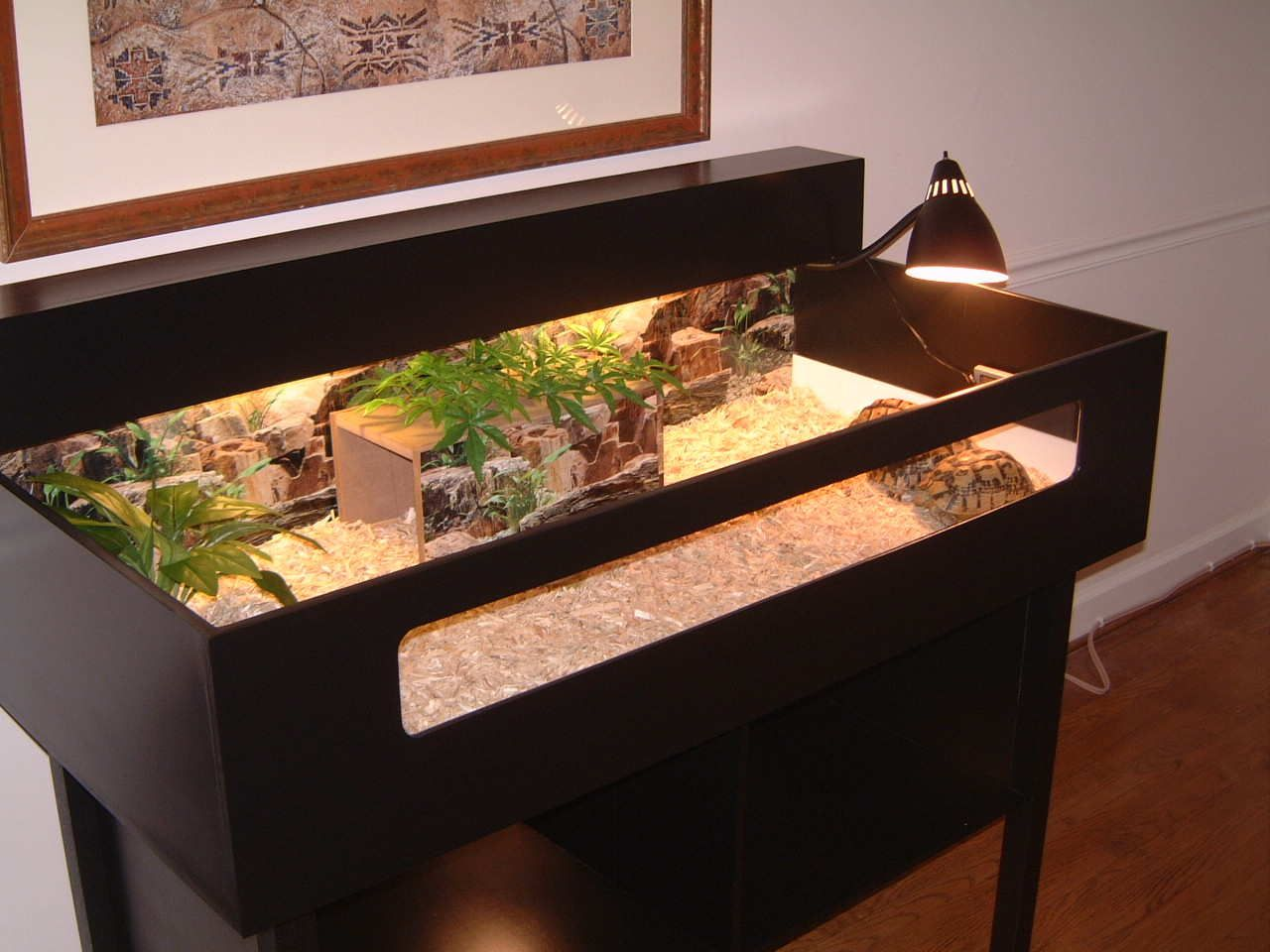 Tortoise table pinteres for Box table design