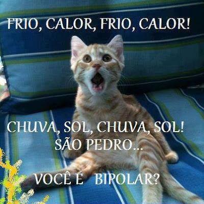 Gatosmanias Hoje Esta Mesmo Frio Humor De Gato Engracado Piadas Com Animais Animais Bonitos