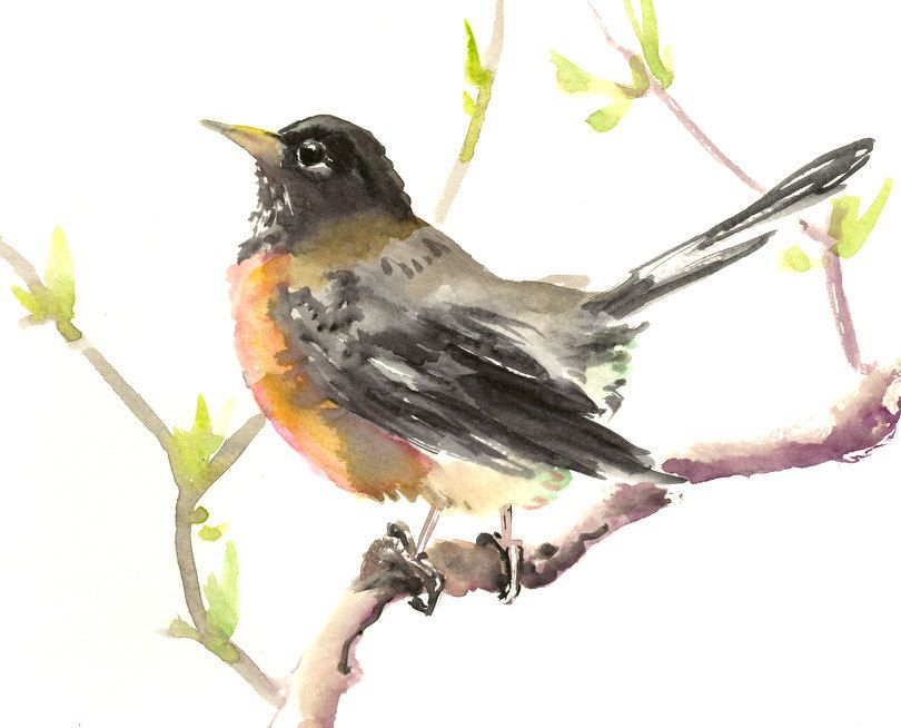 American Robin Original Watercolor Painting 12 X 9 In
