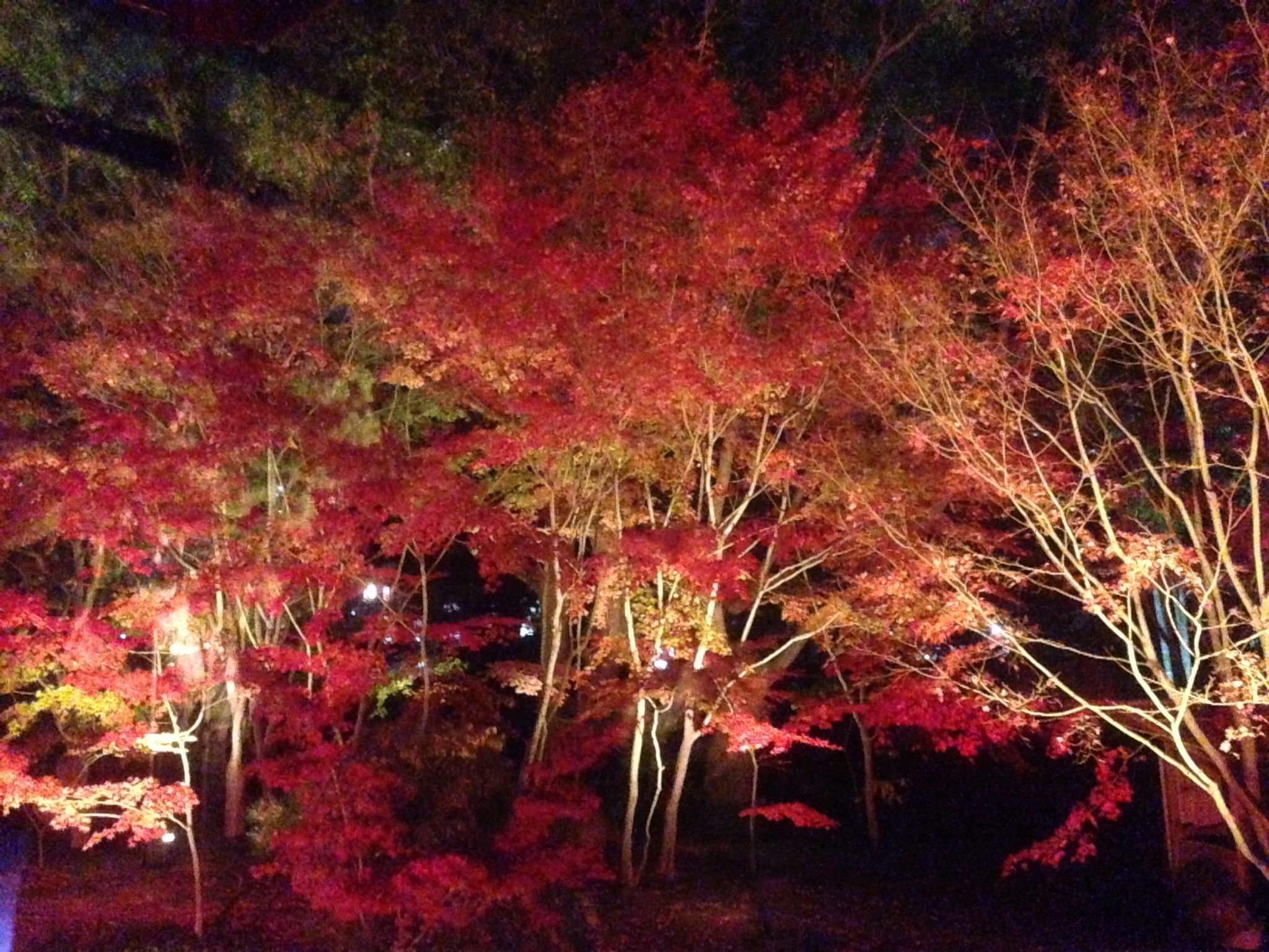 Autumn 2012 in Japan