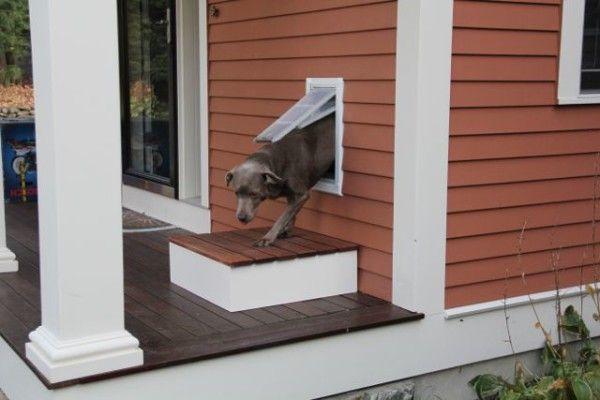 Building A Pet Door Step Pet Door Installation Dog Door Doggie Door Wall