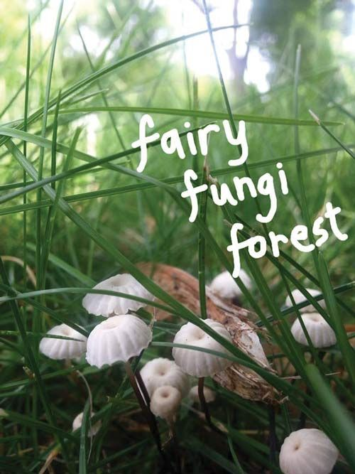 Fairy Fungi Forest - fine art nature photography - Authentic Arts | Natural Jewelry