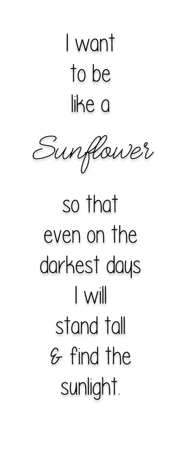 Garden To Still Life Sunflower Quotes White Background Quotes