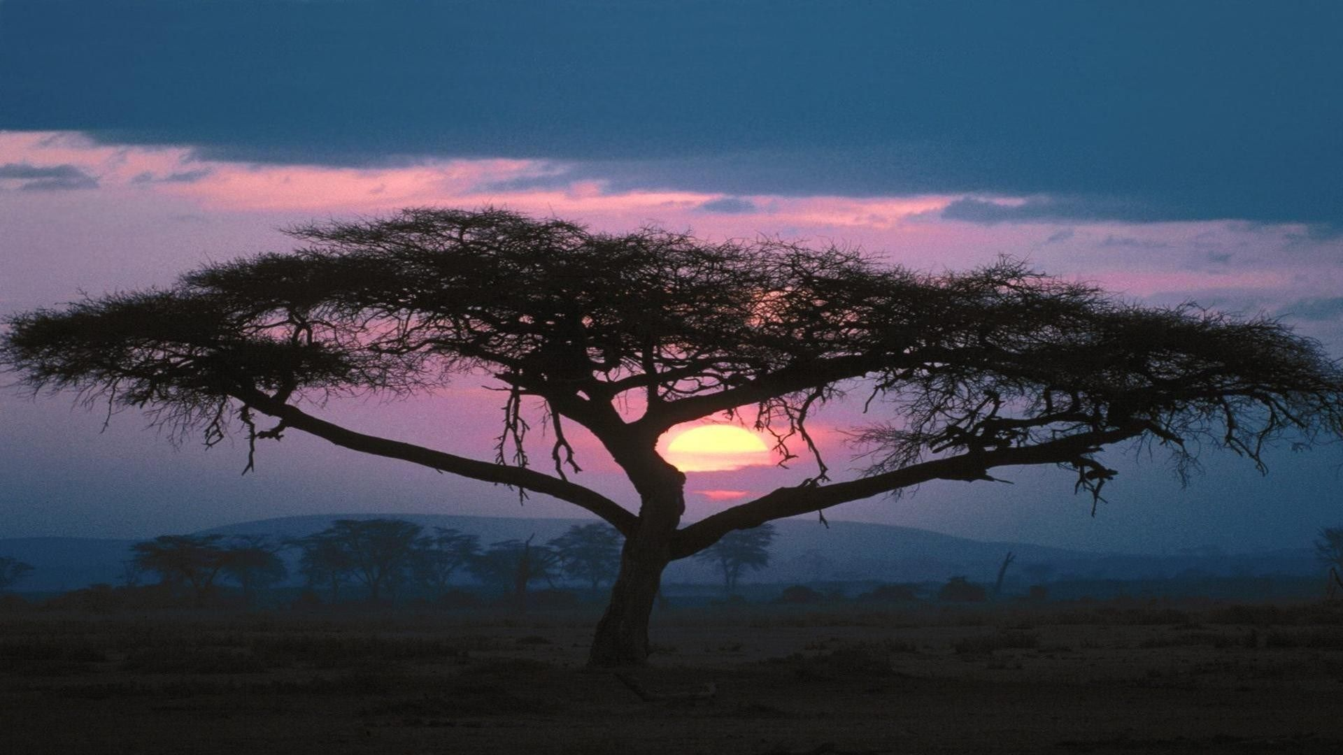 Sunsets African Tree Nature Africa Desktop Wallpapers For