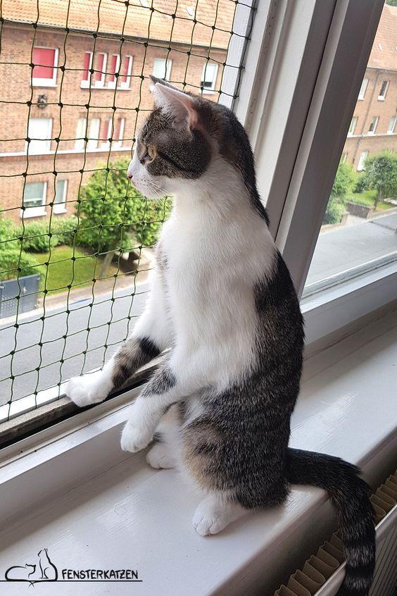 Fenstersicherung für Katzen ohne Bohren | DIY