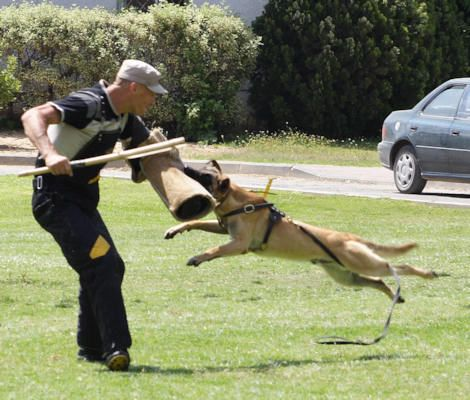 Schutzhund Vs Personal Protection Training For Your Dog