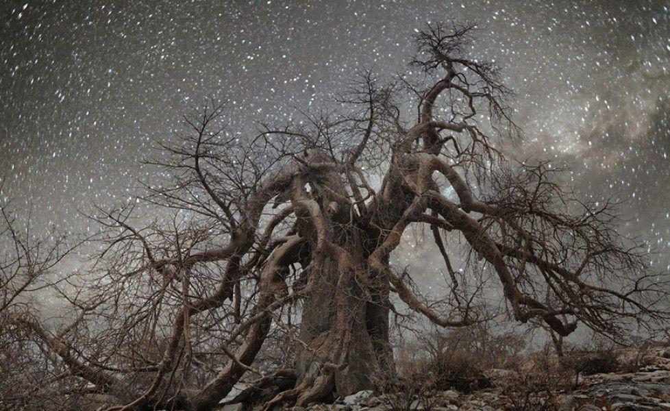http://www.thepostinternazionale.it/mondo/namibia/fotografia-notturna-alberi-tra-le-stelle/ancient-oldest-trees-starlight-photography-beth-moon-11