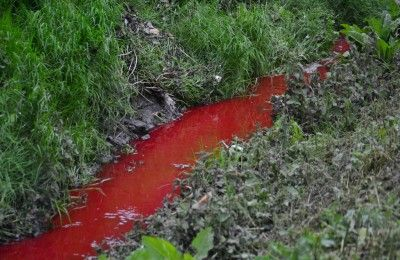 Blood flowing down a stream from a slaughter house.
