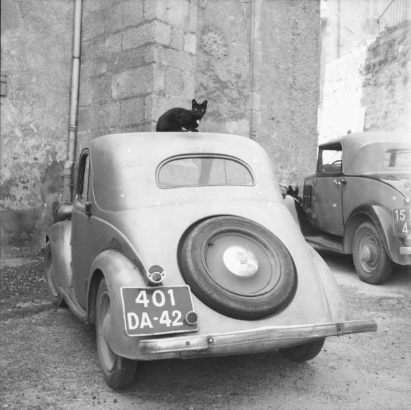 chat noir sur le toit d'une voiture, fonds marcelle vallet | numélyo