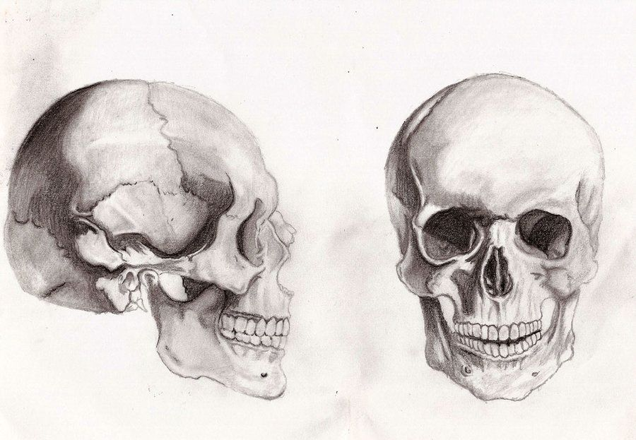 skull anatomy by Gilstrap | Random Hero | Pinterest | Skull anatomy ...