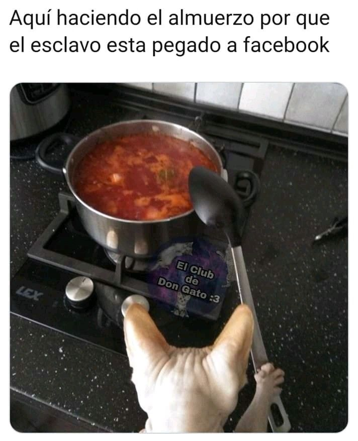 Pin De Yami Suarez En Gatis Memes En Espanol Memes Divertidos Memes De Perros Chistosos