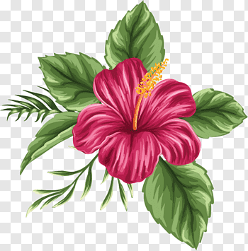 Red Hibiscus Rosa Sinensis Flower Illustration Hawaii Shoeblackplant Drawing Flower Bouquet Hand Painted Hibi In 2020 Hibiscus Drawing Flower Drawing Flower Painting