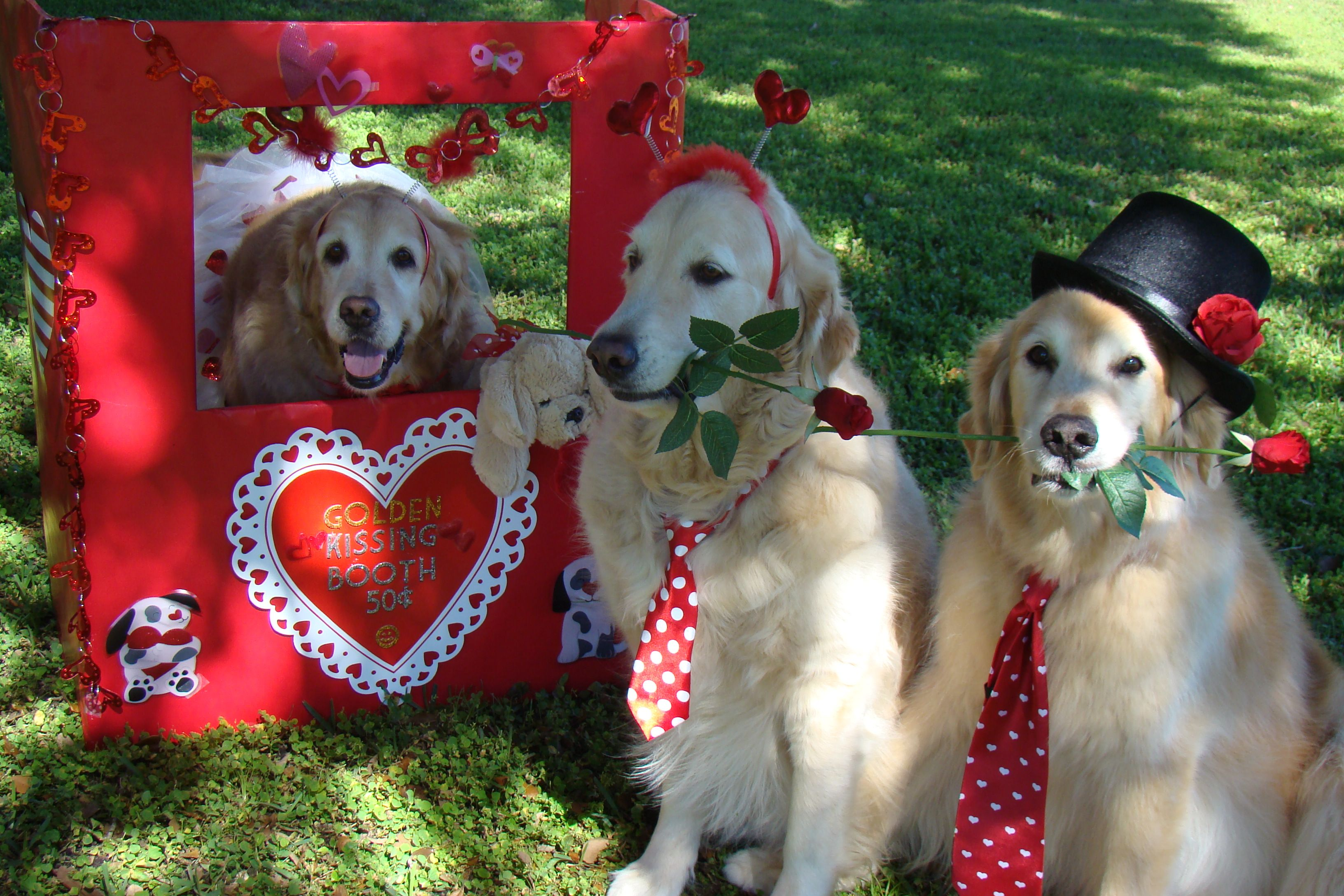 Brie In Her Golden Kissing Booth With Tyler And Bentley In Line 3