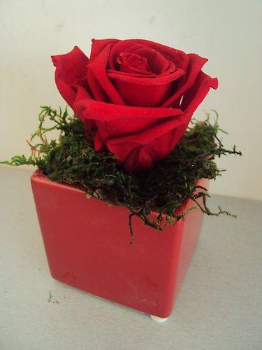 VASE ROSE rouge éternelle & MOUSSE NATURELLE fleur stabilisée préservée LUXE