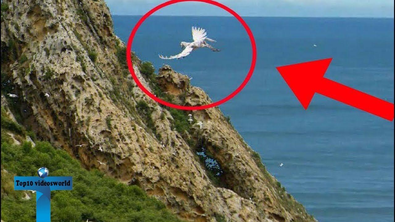 Top 10 Pegasus Caught on Camera Unbelievable Pegasus ...