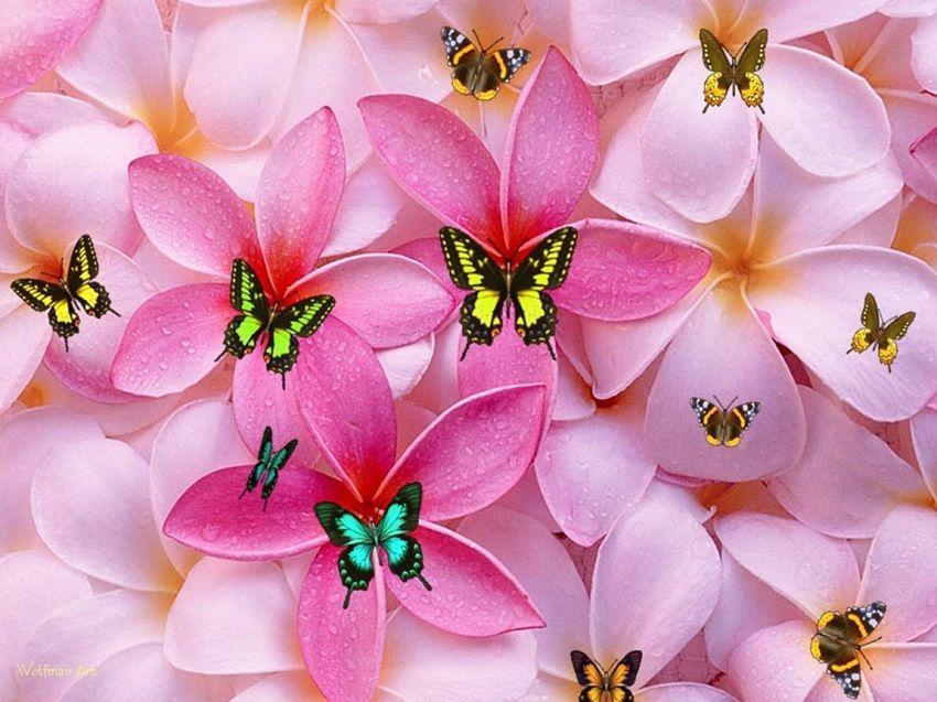 30 Cool Hd Girly Wallpapers For Desktop 2017 Sheideas Walpaper