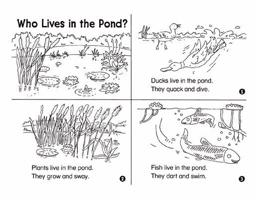 minibook  who lives in the pond