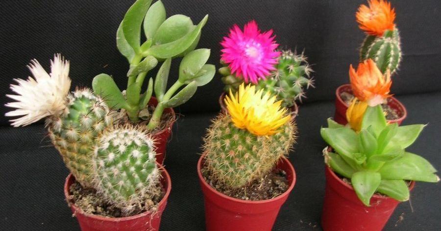 Plantas que hacen fluir energ as positivas propagando for Cactus cuidados interior
