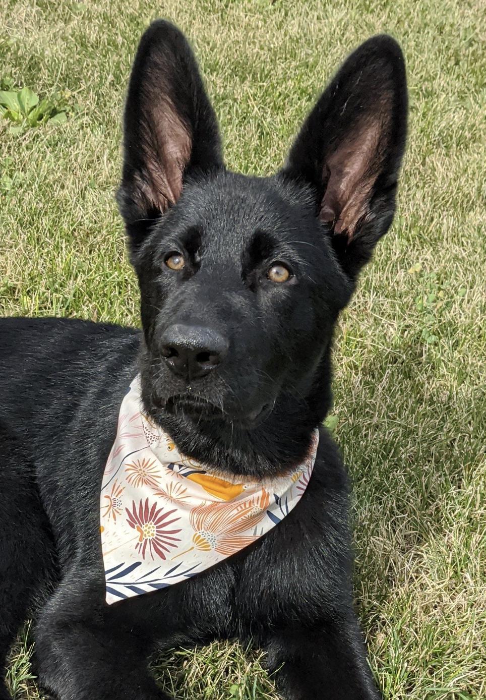 Craigslist List Des Moines Pets - Wayang Pets