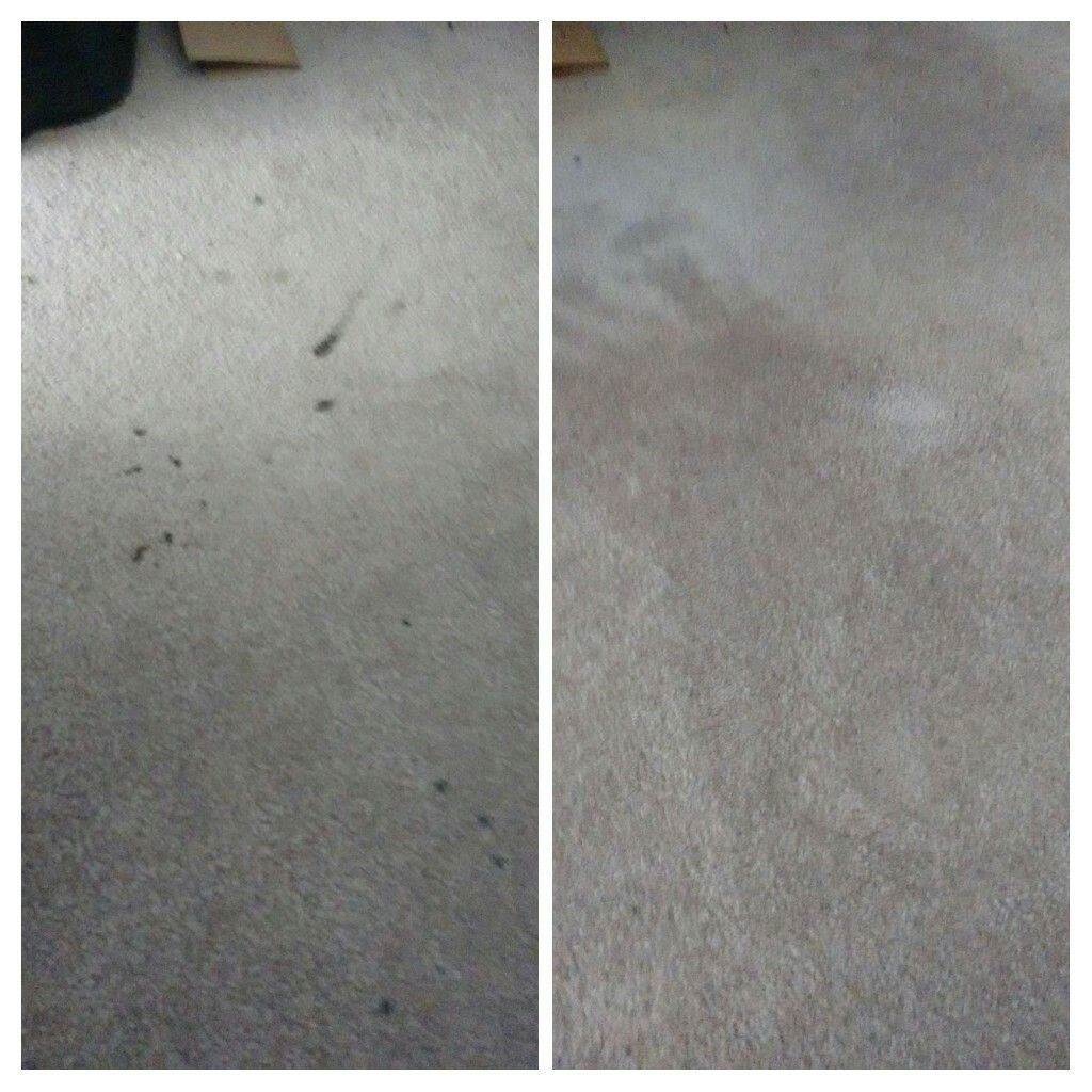 Before and After Carpet Stain Buster