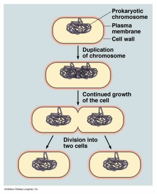 Molecule reproduction google search science microscopic world molecule reproduction google search ccuart Choice Image