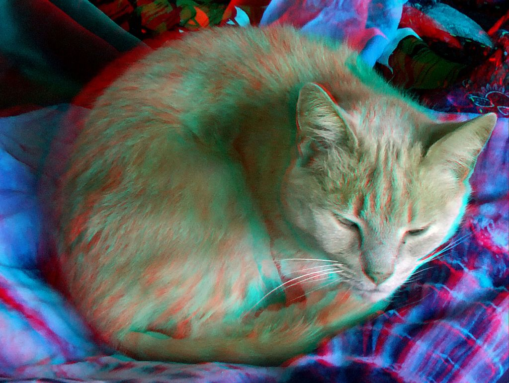 Animals in anaglyph 3D Cat red blue glasses to view Red