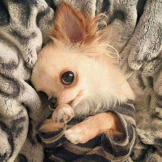 Shy puppy. Dog lovers Hunde, Babyhunde und Tiere hund
