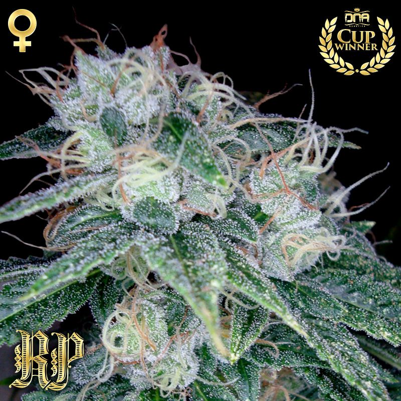Sour Diesel | Reserva Privada Cannabis Seeds | Marijuana