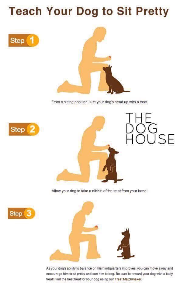 Teach Your Dog To Sit Pretty Dog Training Dog Training Obedience