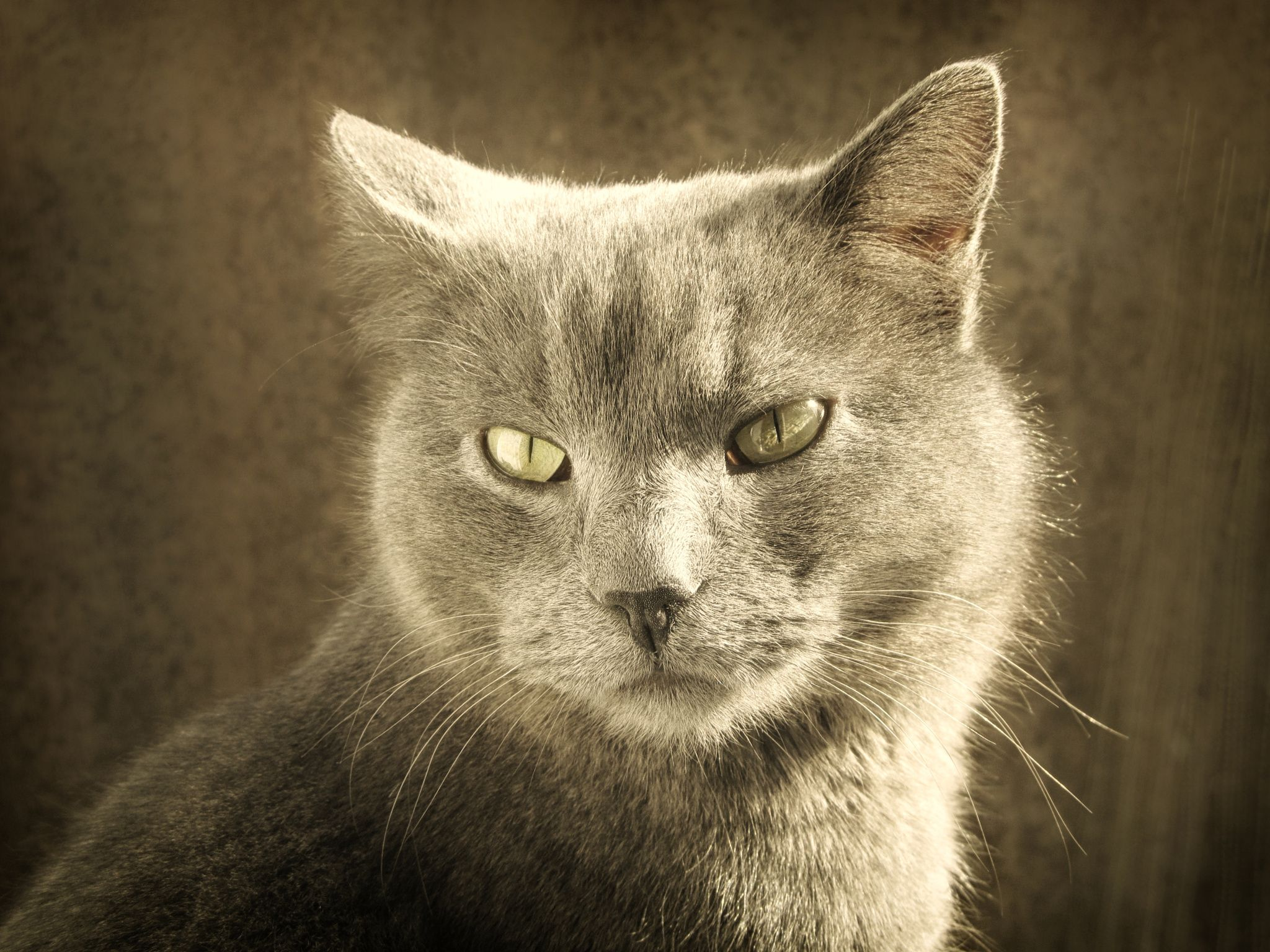 ~ Green eyes ~ - Cats are often valued by humans for ...