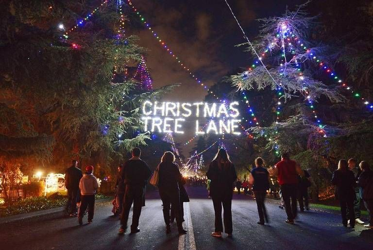 Christmas Tree Lane A Fresno Tradition Since 1920 6 10 6 11 Walking Days My Bday Xmas Tree California Christmas Tree