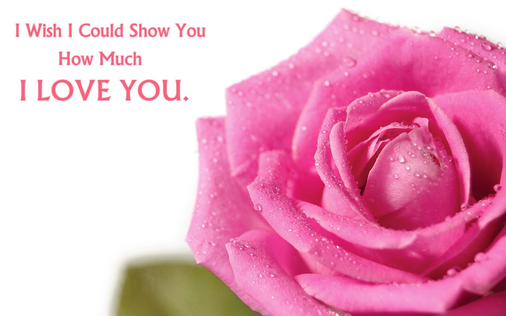 wedding anniversary wishes shayari in hindi%0A Rose Day Messages For Girlfriend