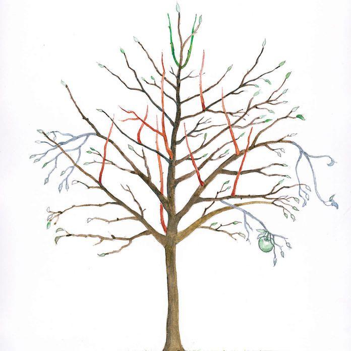Apfelbaum Schneiden Wann : apfelbaum schneiden tipps f r jede baumgr e apfelb ume schneiden alten apfelbaum schneiden ~ Watch28wear.com Haus und Dekorationen