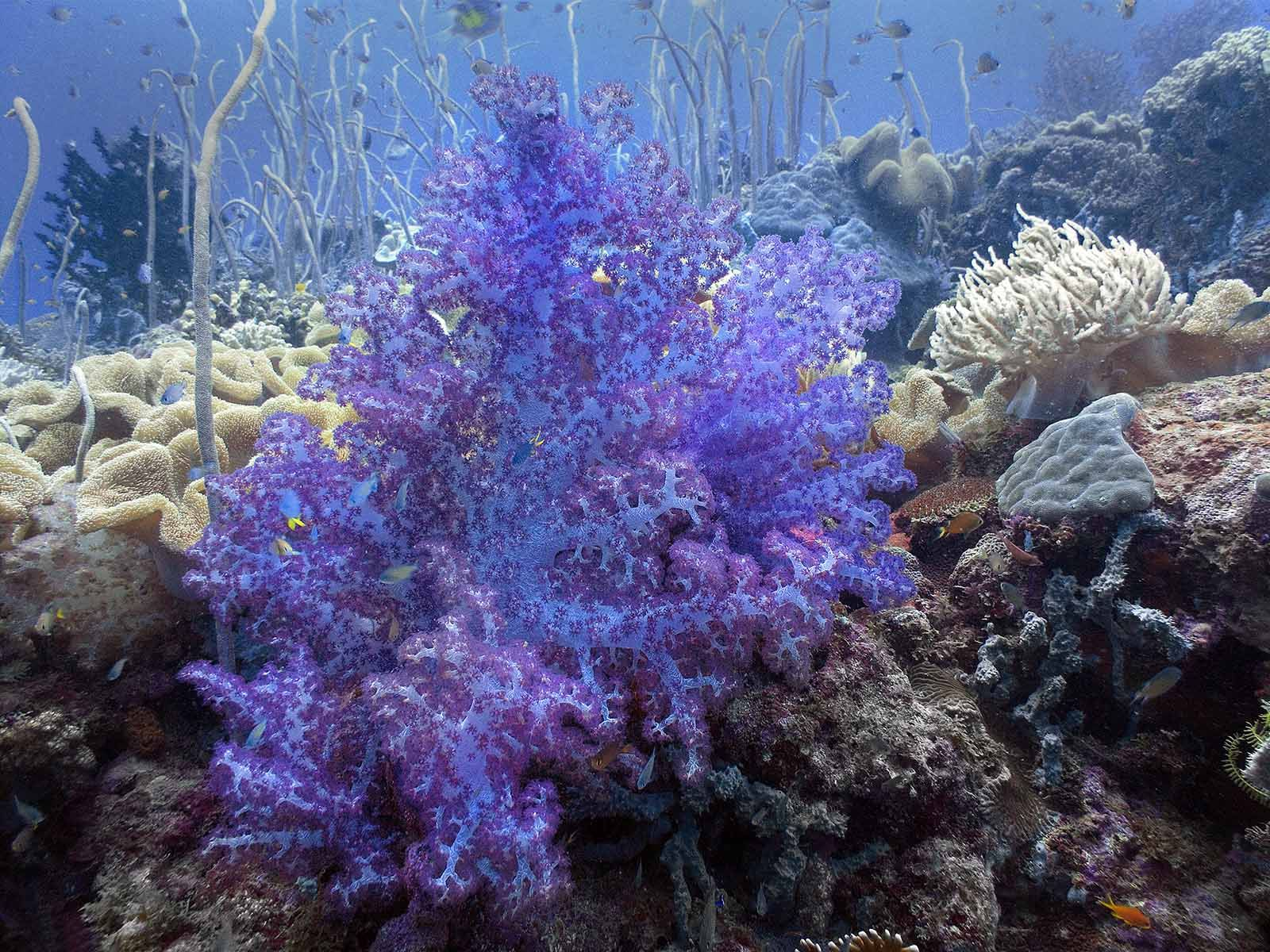 Red Tip Tree Coral Google Search Corals Reef Aquarium