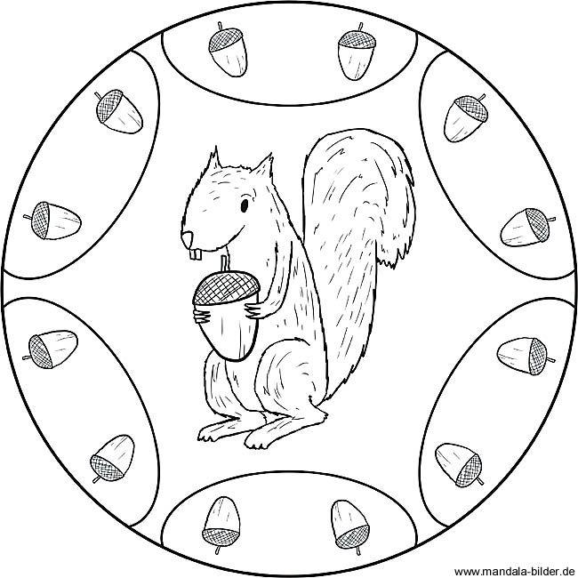 eichhörnchen mandalas – Ausmalbilder für kinder | Eichhörnchen