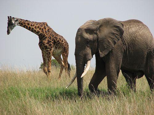 XXX image hot free xxx pics elephant