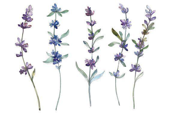 Lavande Clipart Aquarelle Peinture Florale Elements De Bricolage