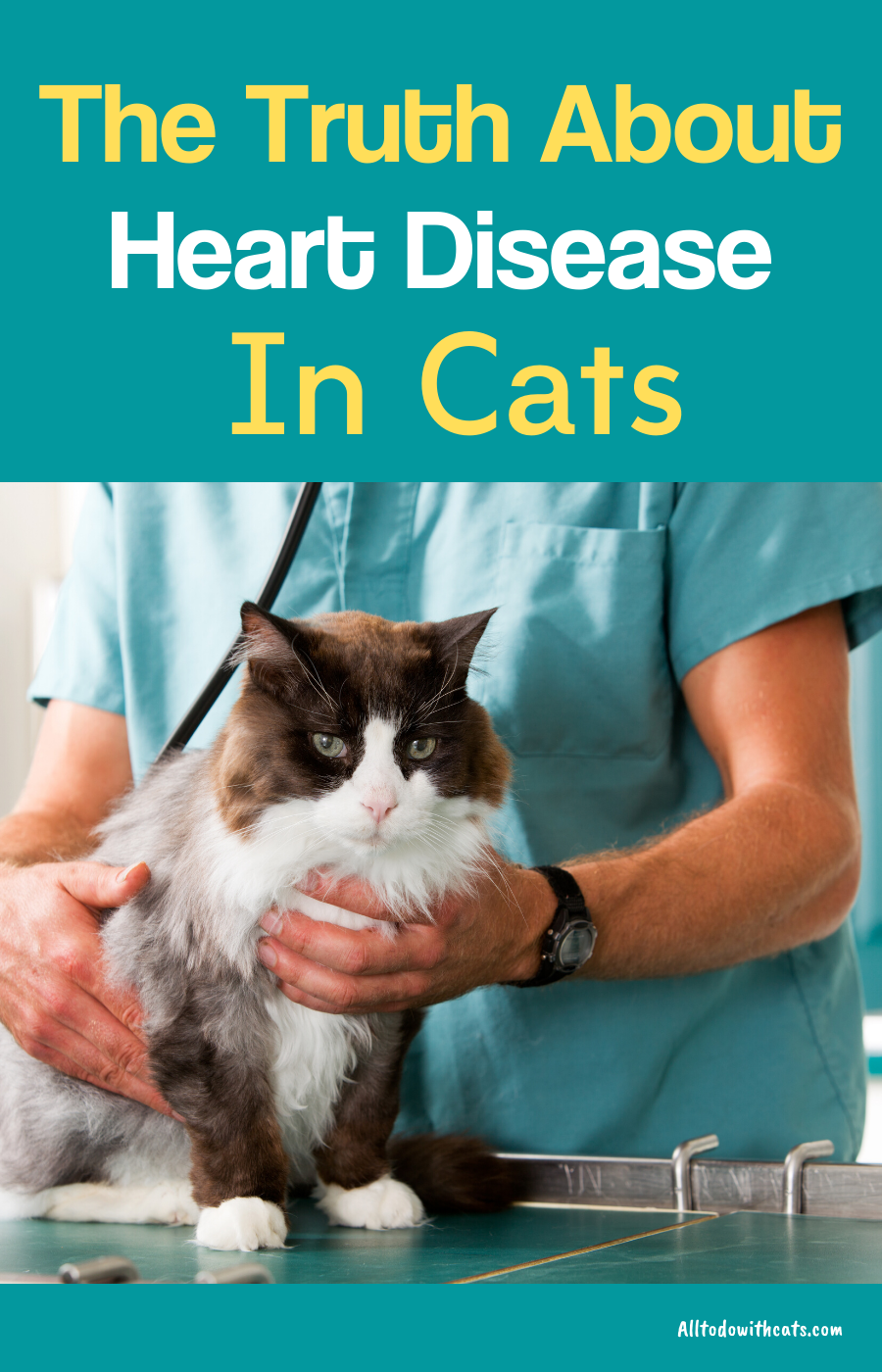 What Are The Symptoms Of Heart Disease In Cats In 2020 Heart Disease Symptoms Kitten Care What Causes Heart Disease