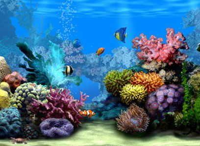 Protectores De Pantalla En 3d 30 Protectores De Pantalla En 3d De Acuarios Peces Y Del Mar Gratis Koraalrif Wallpaper Tropische Vissen