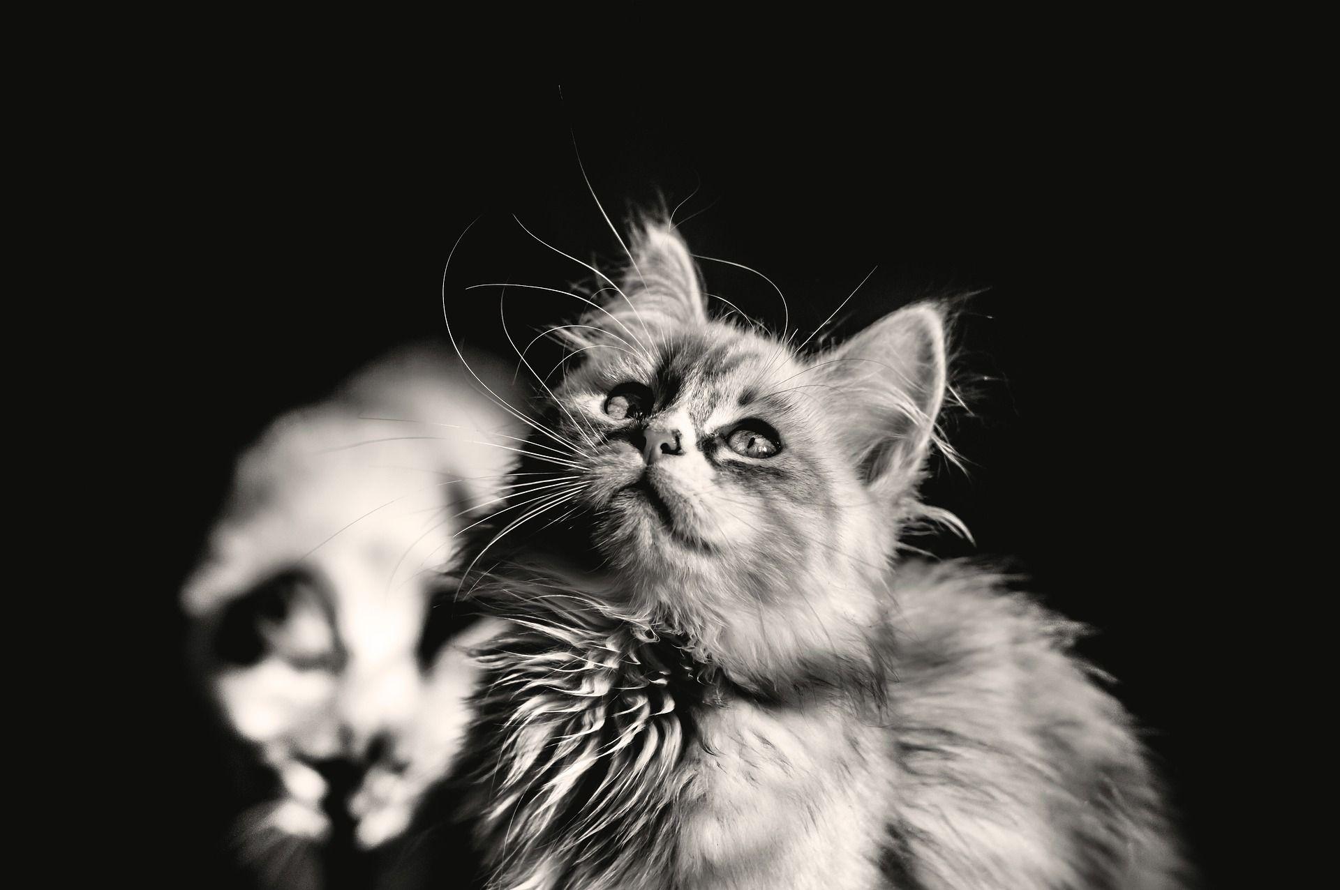 Cute Amazing Cat Cats Cat Memes Funny Cat Memes
