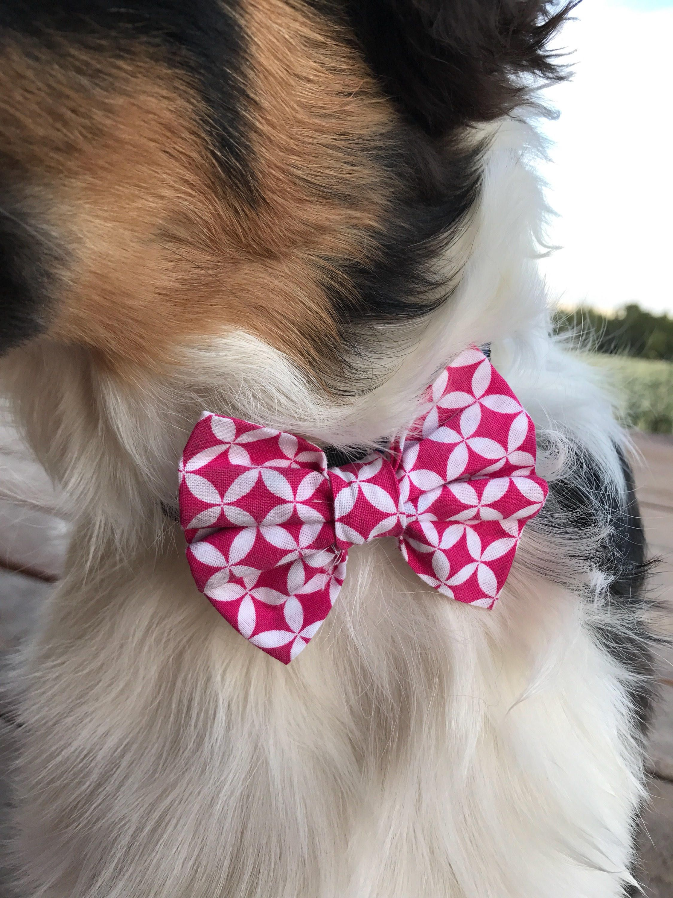 Simple Collar Bow Adorable Dog - a14dbba7dbd9d33b7c232402d62c22ac  Graphic_308557  .jpg