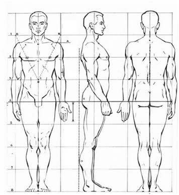 Figura Humana Cuerpo Humano Dibujo Arte De Anatomia Humana Proporciones Del Cuerpo Humano