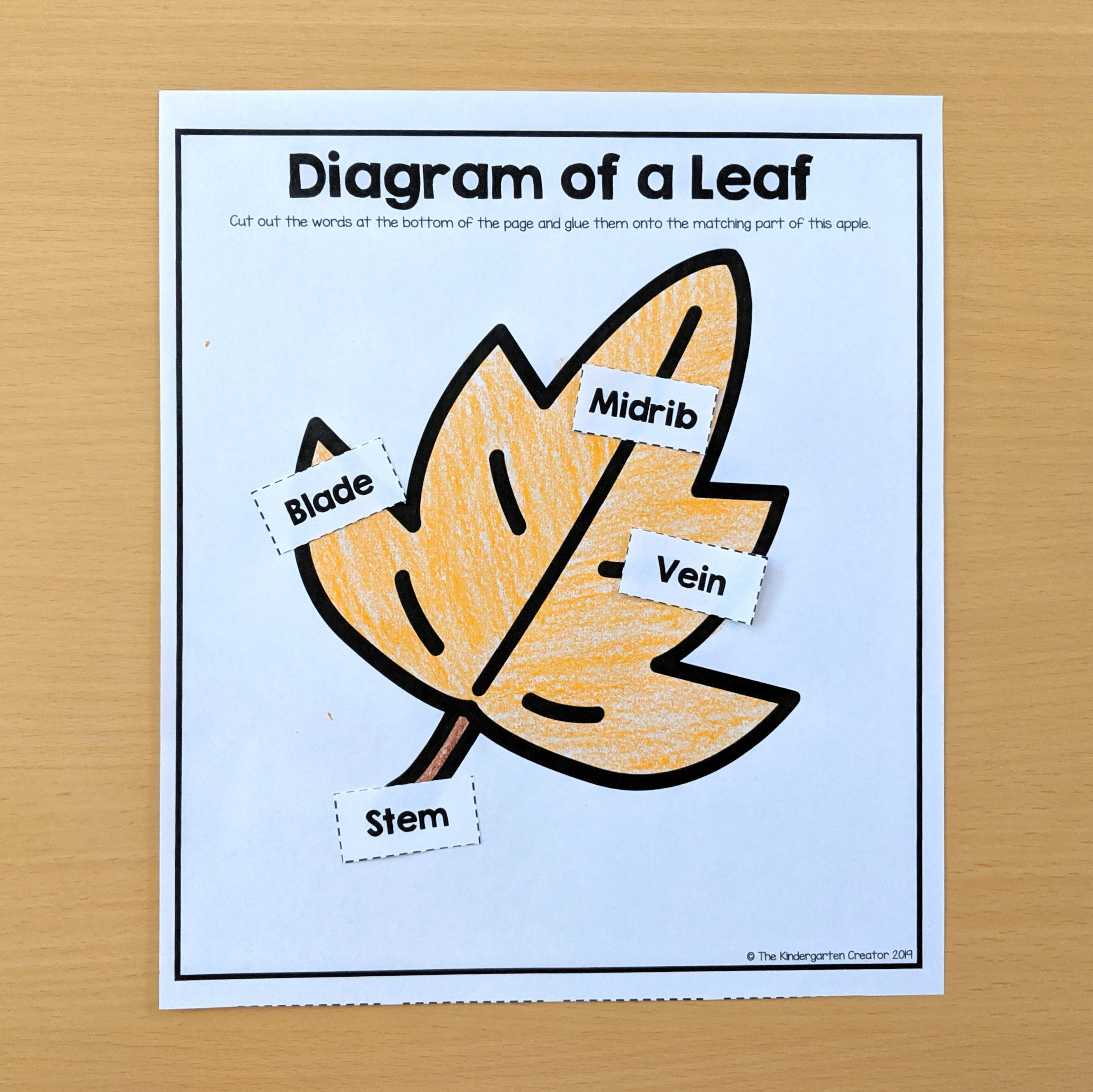 Diagram of a Leaf Activity | Kindergarten activities ...