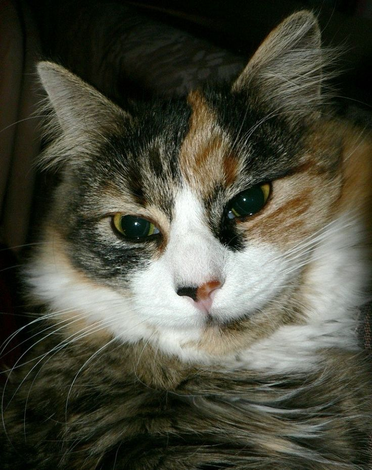 Pin on How to Know When Your Cat is in Pain 25 signs