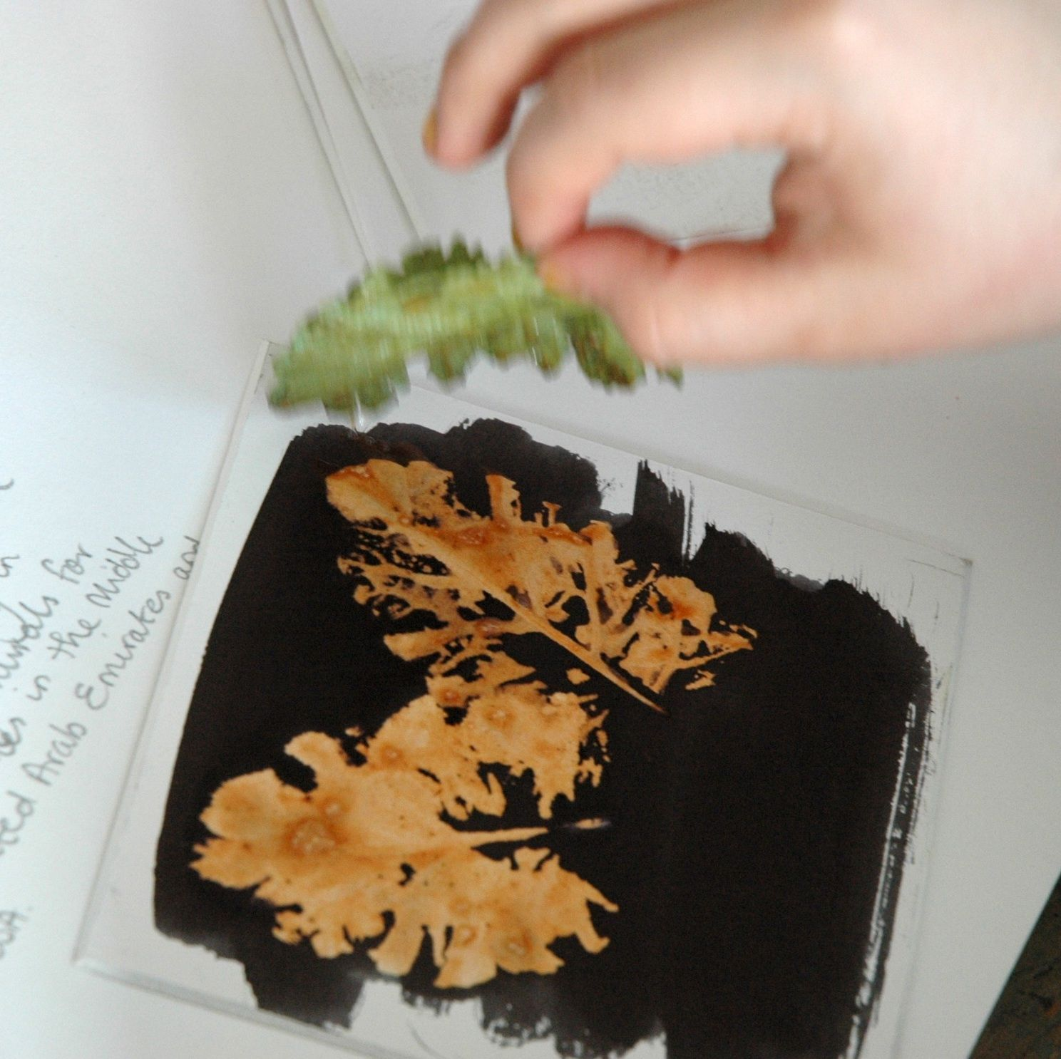 very cool black ink brushed on paper backs of leaves painted