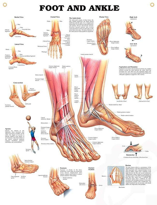 Foot and Ankle Chart 20x26 | I\'m an Operating Room Nurse & I love it ...