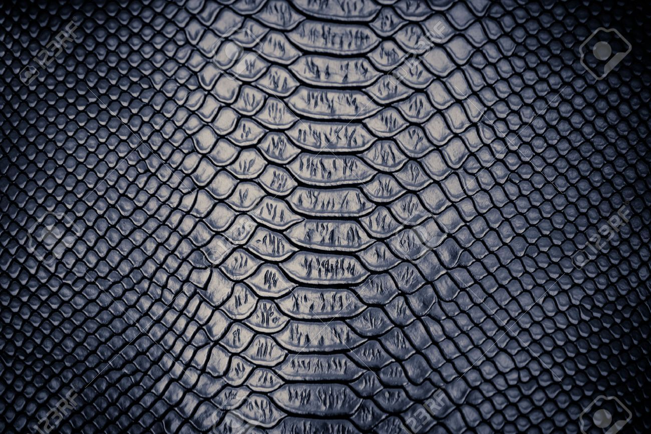 Close Up Of Snake Skin Texture Use For Background Snake Skin Black Background Pattern Skin Textures